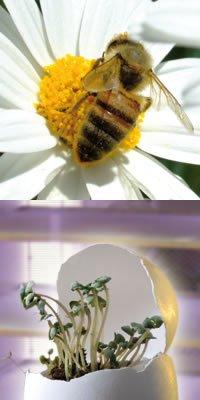 Inkubatori za pčele i klijališta